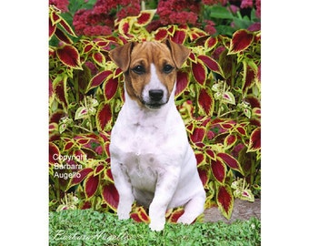 Jack Russell Terrier Flag, Jack Russell Terrier Gift, Jack Russell Terrier Art, Jack Russell Terrier