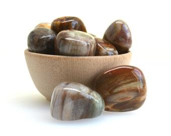Petrified wood tumblestone crystal one piece fossilised wood fossilized wood, choose your size