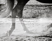 Running Horse - Instant Art - Black and White Equine Photography - Printable Art - Digital Download - Horse Hooves Running Equestrian Art