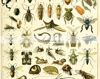 Instant Printable Download - Insect Collection Variety Diagram Illustration - Paper Crafts Altered Art Scrapbook - Vintage Book Plate Image