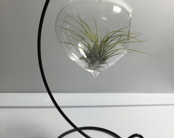 DIY Hanging Air Plant Glass Terrarium Globe / Terrarium Glass / Terrarium Container