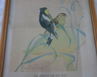 The Bobolink and His Mate Print Fern Bisel Peat Vintage Wood Frame Illustration Birds Signed