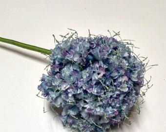 Allium caeruleum Ornamental Onion Blue Puff Flower
