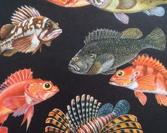1968 Colourful Vintage Fish Print - Tropical Fish - matted and ready to frame - 14 x 11 inches