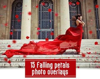 Falling Petals Photo Overlays PNG