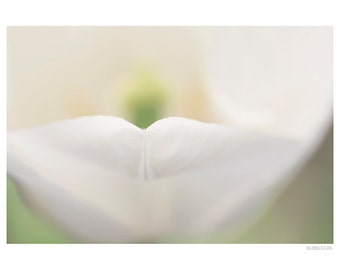 Nature Photography PRINT, White Tulip Details - 1, Wall Art
