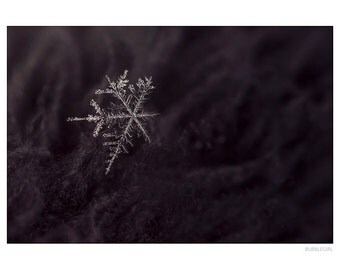 Nature Photography PRINT, Sparkly Snowflake, Wall Art