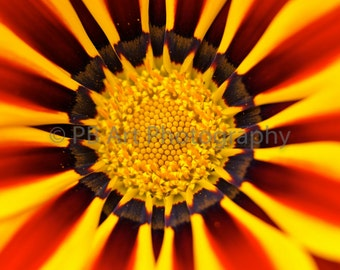 Floral Sunburst Art Print