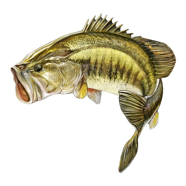 Largemouth bass decal largemouth bass sticker for Bass fish images