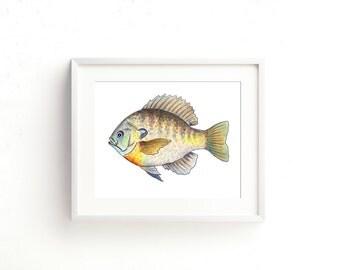 Bluegill Watercolor Fine Art Print