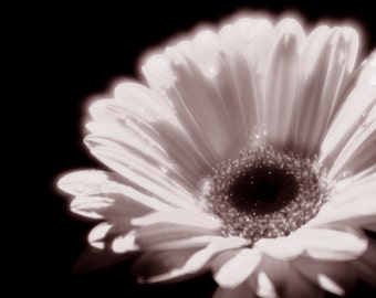 Rain Flowers BW Gerbera Night Gerbera Soft Focus Instant Download #1-16