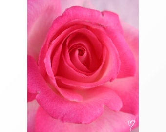 """Pink Rose Photograph, Floral Photography, Pink Art Print, Pink Print, MODERN HOME DECOR, Pink Home Decor, Gift for Her, """"Sweet Love"""""""