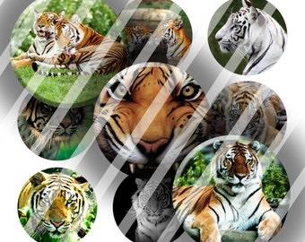 Digital Bottle Cap Collage Sheet - Tigers - 1 Inch Circles Digital Images for Bottlecaps