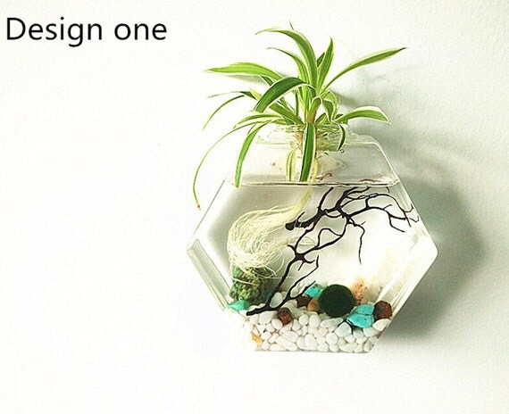 Gift Guide for Nature Lovers - International Shipping. Hexagon Marimo Terrarium Kit For Wall Decor - wall aquarium terrarium/moss ball,stones,sea shells and sea fan. Unique nature living decor gift.