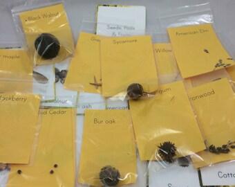 Seed/Pod identification kit, tree identification kit, montessori teaching material, fall tree identification