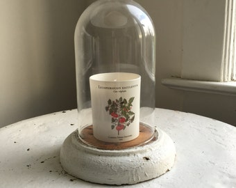 Vintage wooden base with glass dome