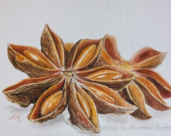 """ORIGINAL Realistic Watercolour Postcard, """"Star anise"""", Hand Painted Spice - Signed by Artist"""