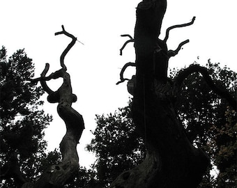 Ghost Tree high contrast creepy ancient woodland photograph