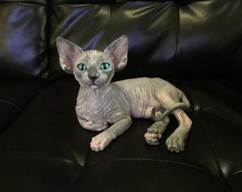 Life-Sized OOAK Sphynx kitten Sculpture