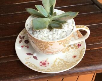 Succulent in tea cup set