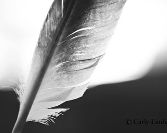 Whimsical Feather Fine Art Photo, Black and White or Color