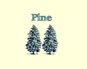 Pine: Natural Liquid Soap