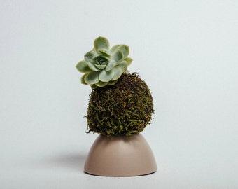 Green Moss Ball Kokedama with Succulent - handmade in Sydney