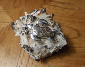 Siver Sea turtle with turritella fossil