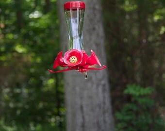 Hummingbirds at Blue Hills