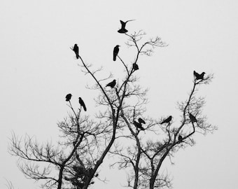 Crows - Tree - Crows Photo - Tree Photo - Black and White - Birds Photo - Digital Photo - Digital Download - Instant Download - Wall Art