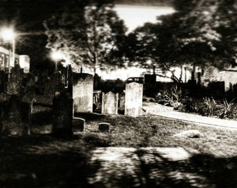 Garden of the Dead B/W laminated photo poster FREE SHIPPING