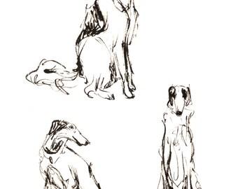 Borzoi Ink Drawing