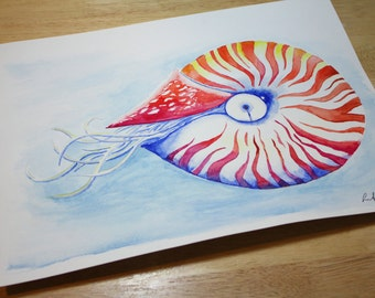 Original Nautilus Watercolor- 11 x 15