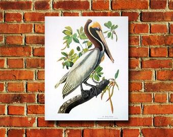 Audubon Brown Pelican Poster - #0569