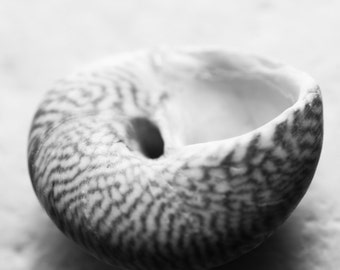 Seashell Macro, Nature Photography, Marine Macro, Wall Art, Home Decor