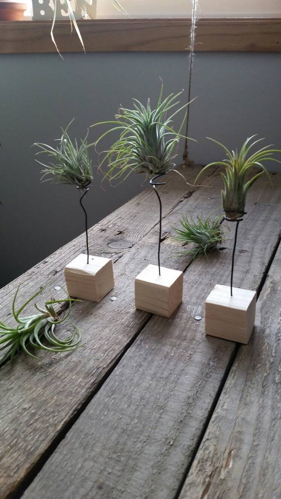 air plant wood and wire holder display by beninthebackwoods. Black Bedroom Furniture Sets. Home Design Ideas