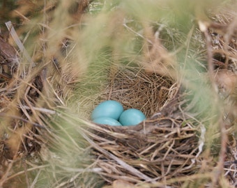 Eggs, Blue, Easter, Spring, Birds, Nest, Twigs, Branches, Family, Babies, Together, Three