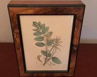 Vintage burlwood hanging key closet with botanical print