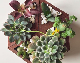 Succulents in tree / succulent plants  / succulent planter / vertical garden / succulent garden / flower box / cactus / cacti / garden pots