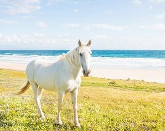 BEACH HORSE. equine print, horse print, white horse, photographic print