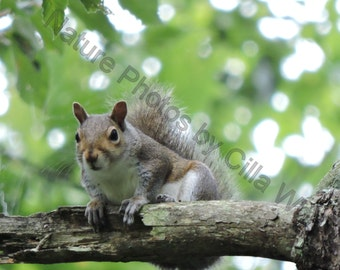 Oh Look, a Squirrel! in 4x6 or 8x10
