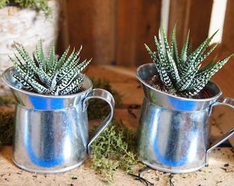 2 Mini Tin Planters And 2 Succulents