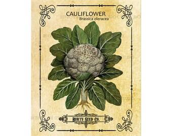 Vintage Cauliflower Seed Packet Digital Download Transfer Burlap Clip Art; 1003