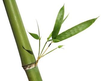 Bamboo Shoots - Hermit Crab Food