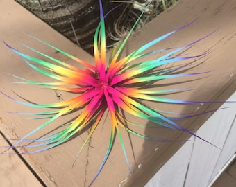 "Tillandsia Air Plant Fairy Garden  Bursting With Color!  5""-7"" Wide"