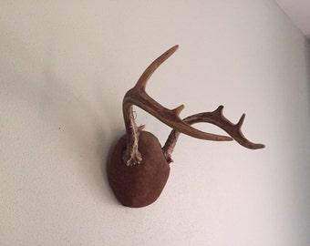 Vintage taxidermy deer buck mount