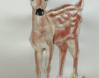 Young White tailed deer fawn