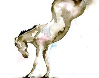 Bucking Horse