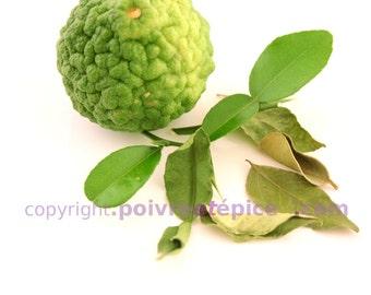KAFFIR leaf, whole