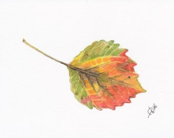 "Autumn Leaf Print - Big Toothed Aspen - 5"" x 7"""